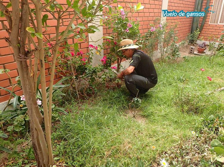 Trabajando en el jardín